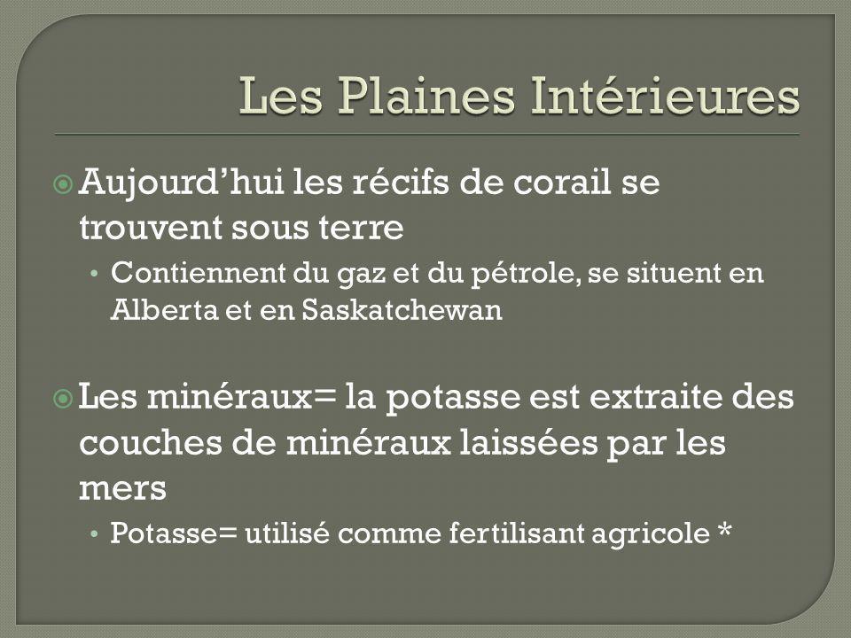 Aujourdhui les récifs de corail se trouvent sous terre Contiennent du gaz et du pétrole, se situent en Alberta et en Saskatchewan Les minéraux= la pot