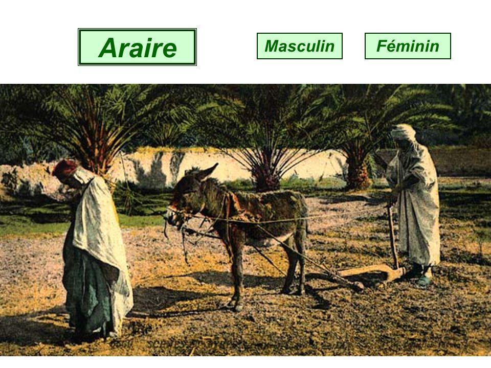 Ébène MasculinFéminin