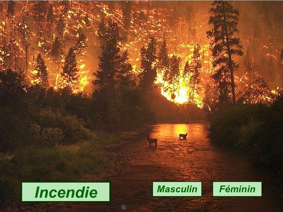 Edelweiss Masculin Féminin