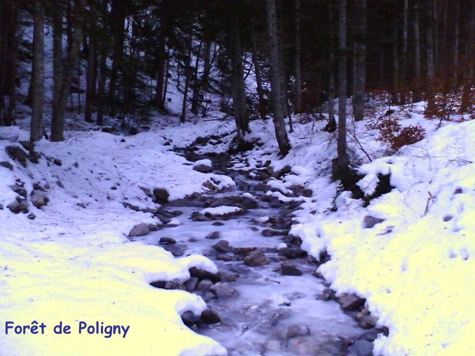 Forêt de Poligny