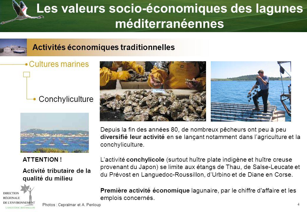 4 Cultures marines Conchyliculture Première activité économique lagunaire, par le chiffre d'affaire et les emplois concernés. ATTENTION ! Activité tri
