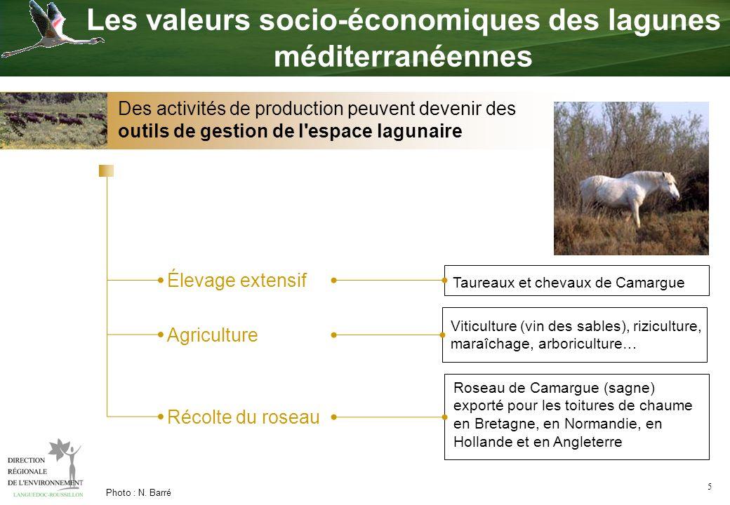 5 Photo : N. Barré Élevage extensif Agriculture Récolte du roseau Les valeurs socio-économiques des lagunes méditerranéennes Viticulture (vin des sabl