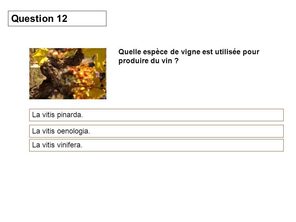 Quelle espèce de vigne est utilisée pour produire du vin ? La vitis pinarda. Question 12 La vitis oenologia. La vitis vinifera.
