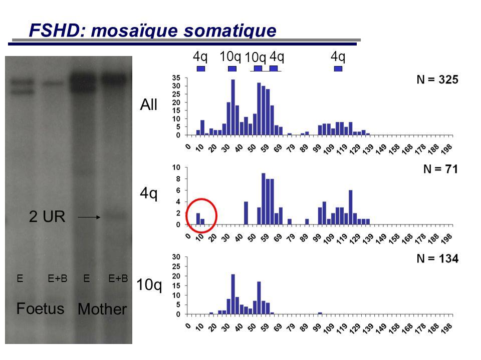 FSHD: mosaïque somatique All 4q 10q 4q 10 kb 10q Foetus Mother E E+B 2 UR