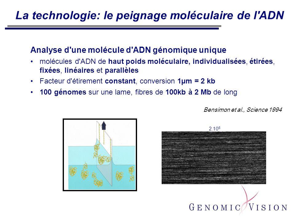 La technologie: le peignage moléculaire de l'ADN Analyse d'une molécule d'ADN génomique unique molécules d'ADN de haut poids moléculaire, individualis