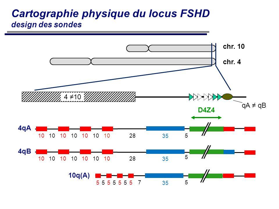 4qB 10q(A) 4qA 5 5 5 35 D4Z4 10 28 5555555 7 4 10 qA qB chr. 10 chr. 4 Cartographie physique du locus FSHD design des sondes