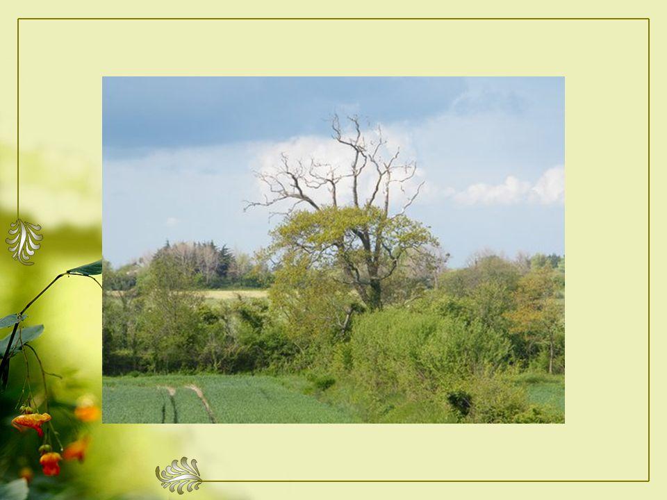 Cet arbre est certainement plus que trentenaire, Son tronc doit avoir de nombreuses empreintes.