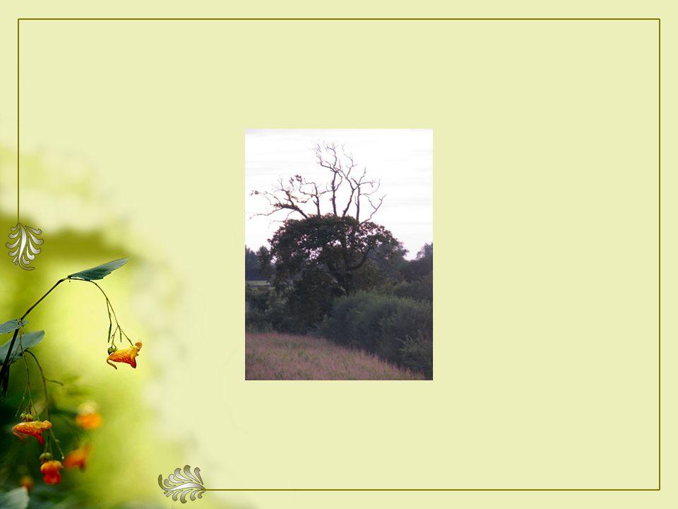 Jirai un jour près de lui, cet arbre mort. Celui que jadmire, depuis notre arrivée.