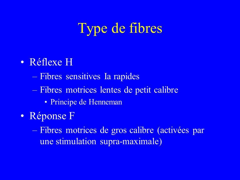 Type de fibres Réflexe H –Fibres sensitives Ia rapides –Fibres motrices lentes de petit calibre Principe de Henneman Réponse F –Fibres motrices de gro
