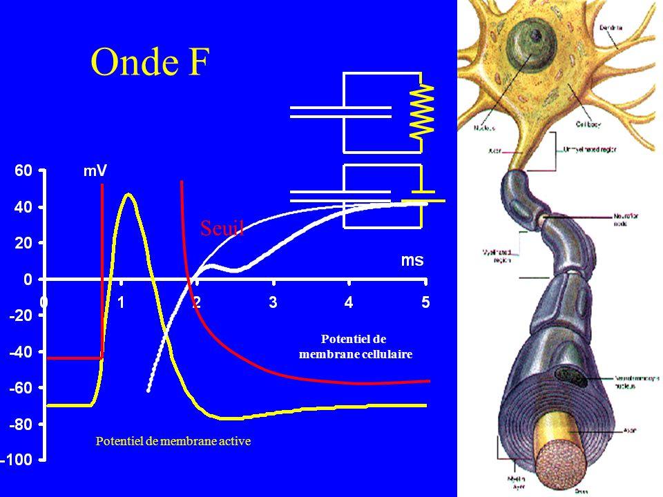 Vitesse de conduction de l onde F 2 D / ( F - M - 1 ) –F: latence de l onde F au poignet –M: latence de l onde M au poignet –D: estimation de la distance totale 1 ms