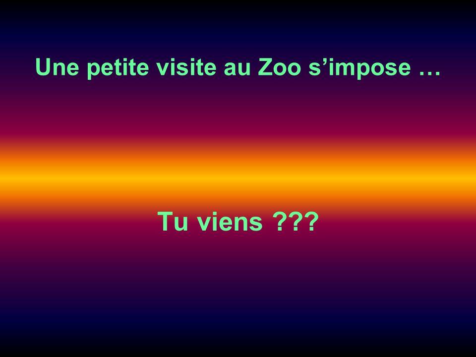 Une petite visite au Zoo simpose … Tu viens ???