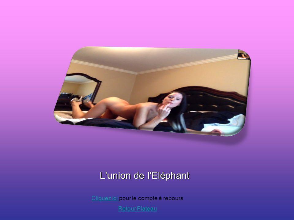 L'union de l'Eléphant Cliquez ici Cliquez ici pour le compte à rebours Retour Plateau