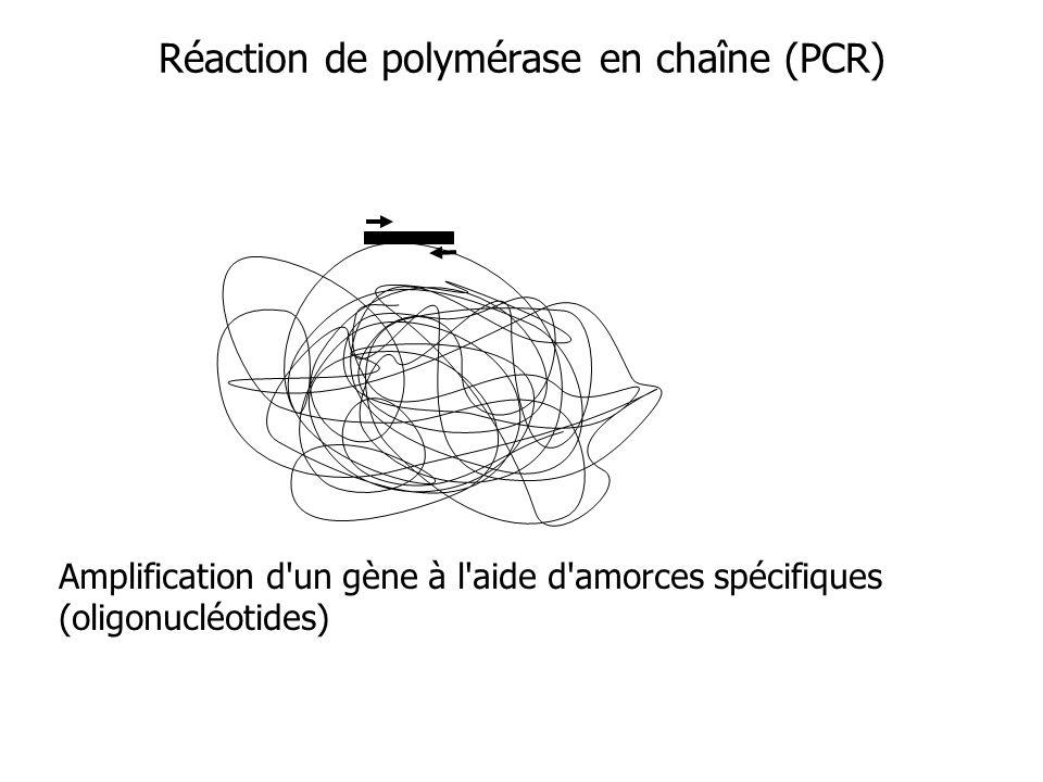 Réaction de polymérase en chaîne (PCR) Amplification d un gène à l aide d amorces spécifiques (oligonucléotides)