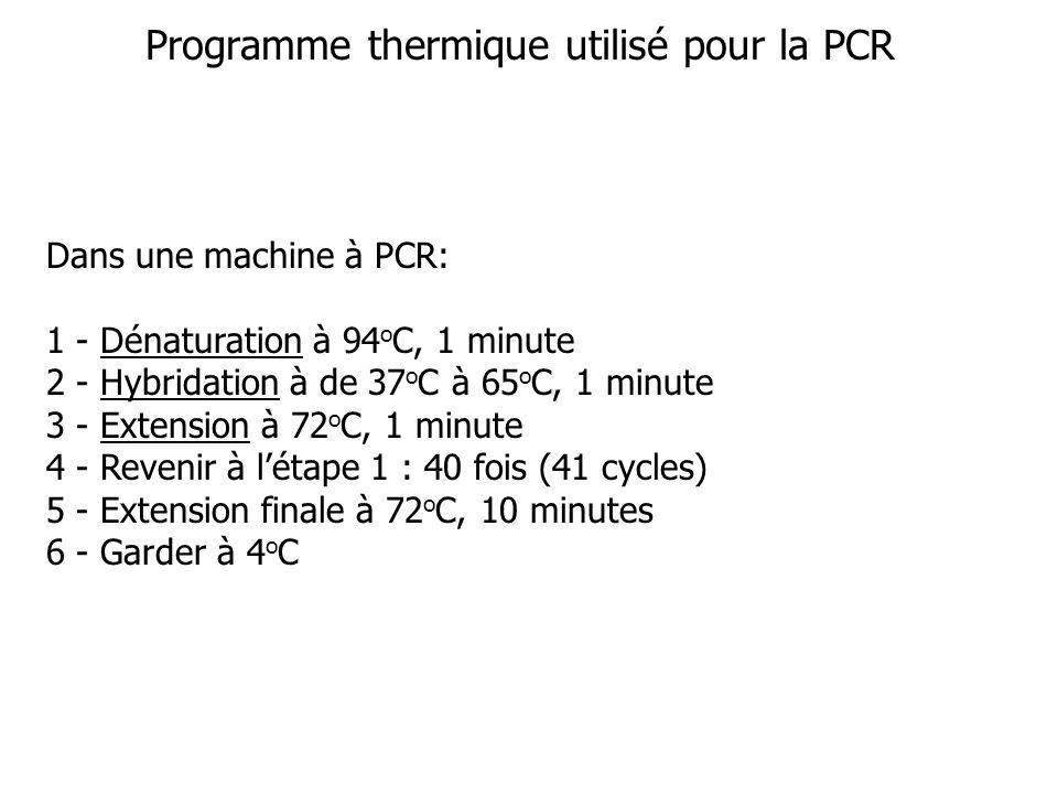 Programme thermique utilisé pour la PCR Dans une machine à PCR: 1 - Dénaturation à 94 o C, 1 minute 2 - Hybridation à de 37 o C à 65 o C, 1 minute 3 - Extension à 72 o C, 1 minute 4 - Revenir à létape 1 : 40 fois (41 cycles) 5 - Extension finale à 72 o C, 10 minutes 6 - Garder à 4 o C