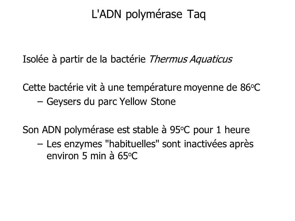 L ADN polymérase Taq Isolée à partir de la bactérie Thermus Aquaticus Cette bactérie vit à une température moyenne de 86 o C –Geysers du parc Yellow Stone Son ADN polymérase est stable à 95 o C pour 1 heure –Les enzymes habituelles sont inactivées après environ 5 min à 65 o C