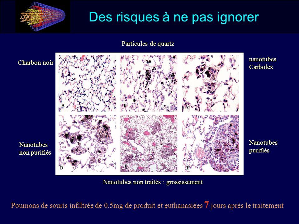Des risques à ne pas ignorer Charbon noir Particules de quartz nanotubes Carbolex Nanotubes non purifiés Nanotubes non traités : grossissement Nanotub