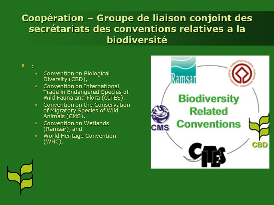 Coopération – Groupe de liaison conjoint des secrétariats des conventions relatives a la biodiversité : Convention on Biological Diversity (CBD),Convention on Biological Diversity (CBD), Convention on International Trade in Endangered Species of Wild Fauna and Flora (CITES),Convention on International Trade in Endangered Species of Wild Fauna and Flora (CITES), Convention on the Conservation of Migratory Species of Wild Animals (CMS),Convention on the Conservation of Migratory Species of Wild Animals (CMS), Convention on Wetlands (Ramsar), andConvention on Wetlands (Ramsar), and World Heritage Convention (WHC).World Heritage Convention (WHC).
