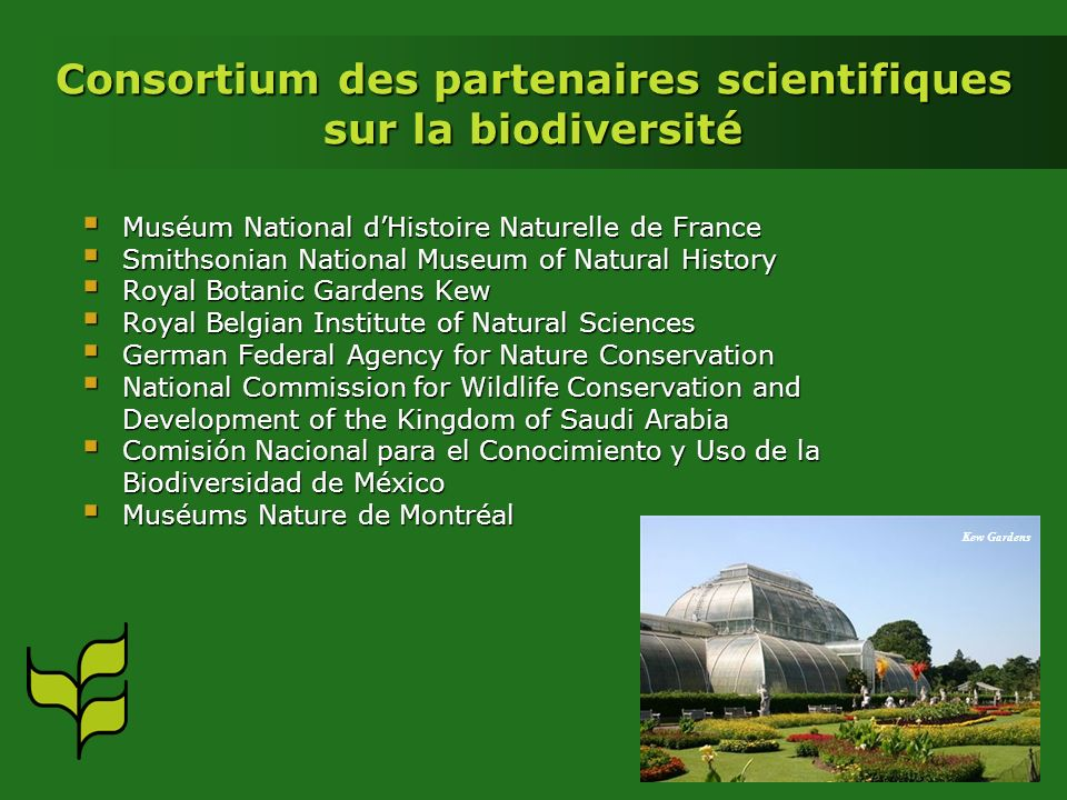 Consortium des partenaires scientifiques sur la biodiversité Muséum National dHistoire Naturelle de France Muséum National dHistoire Naturelle de France Smithsonian National Museum of Natural History Smithsonian National Museum of Natural History Royal Botanic Gardens Kew Royal Botanic Gardens Kew Royal Belgian Institute of Natural Sciences Royal Belgian Institute of Natural Sciences German Federal Agency for Nature Conservation German Federal Agency for Nature Conservation National Commission for Wildlife Conservation and Development of the Kingdom of Saudi Arabia National Commission for Wildlife Conservation and Development of the Kingdom of Saudi Arabia Comisión Nacional para el Conocimiento y Uso de la Biodiversidad de México Comisión Nacional para el Conocimiento y Uso de la Biodiversidad de México Muséums Nature de Montréal Muséums Nature de Montréal Kew Gardens