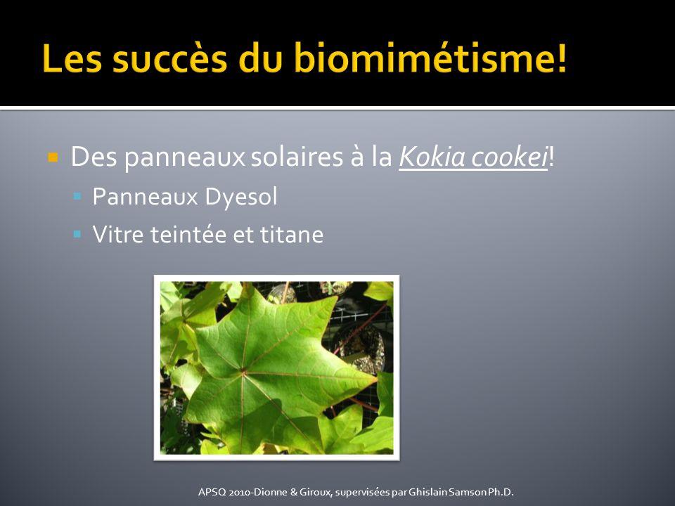 Des panneaux solaires à la Kokia cookei! Panneaux Dyesol Vitre teintée et titane APSQ 2010-Dionne & Giroux, supervisées par Ghislain Samson Ph.D.