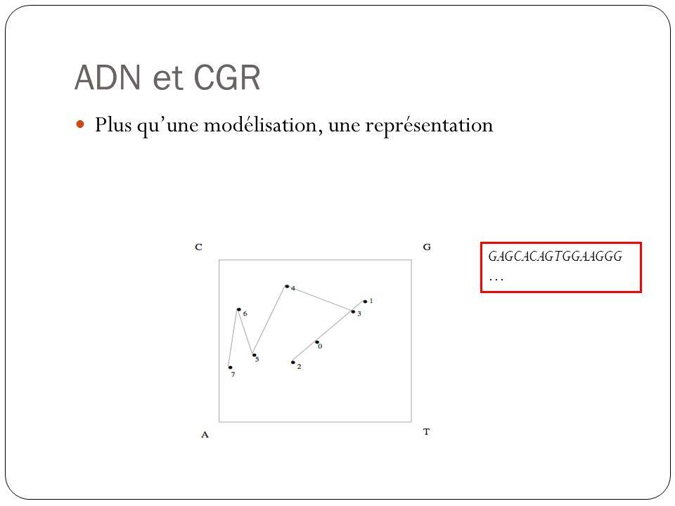 ADN et CGR Plus quune modélisation, une représentation GAGCACAGTGGAAGGG …