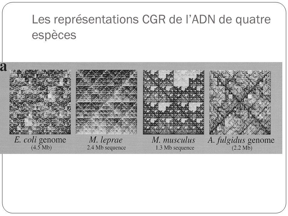 Les représentations CGR de lADN de quatre espèces