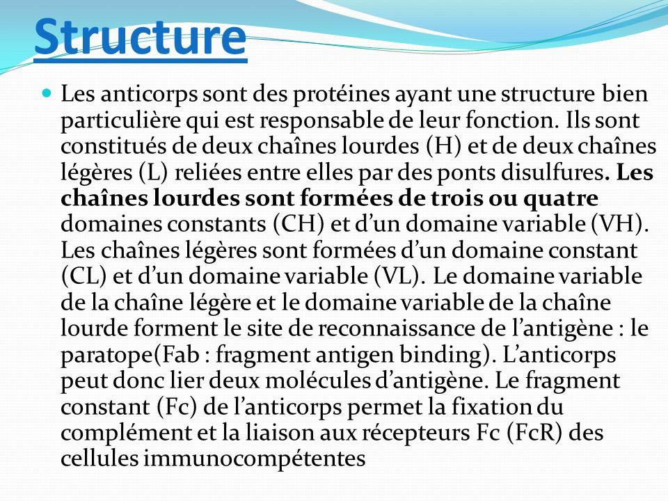 Structure Les anticorps sont des protéines ayant une structure bien particulière qui est responsable de leur fonction. Ils sont constitués de deux cha