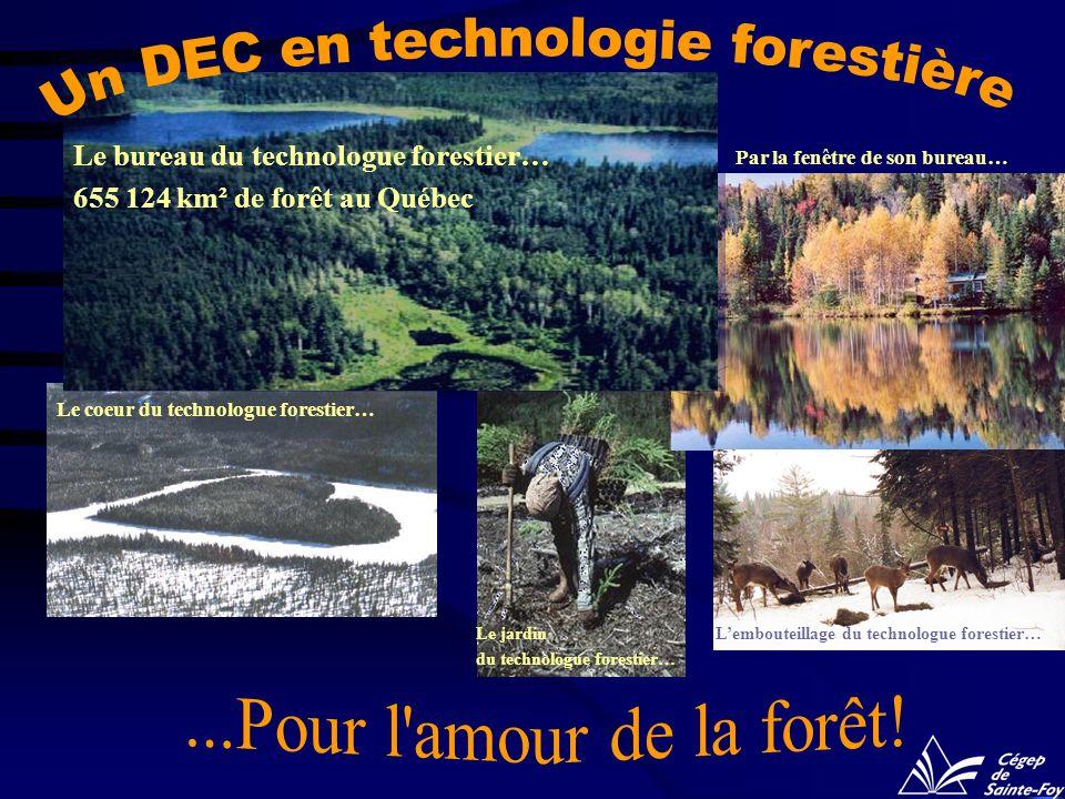 Le bureau du technologue forestier… 655 124 km² de forêt au Québec Lembouteillage du technologue forestier… Le coeur du technologue forestier… Par la