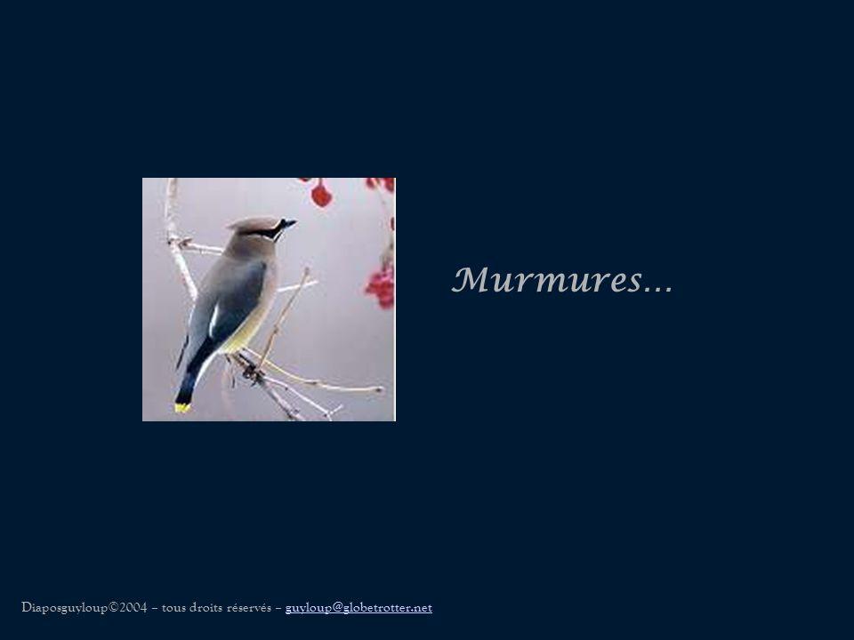 Murmures… Diaposguyloup©2004 – tous droits réservés – guyloup@globetrotter.netguyloup@globetrotter.net