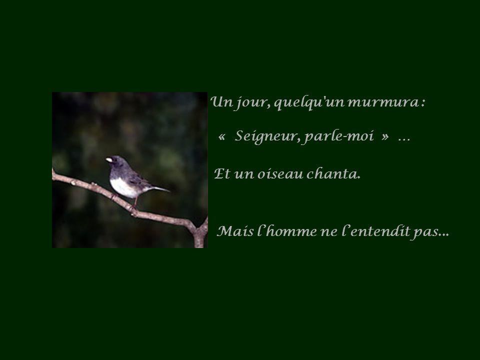 Un jour, quelqu un murmura : « Seigneur, parle-moi » … Et un oiseau chanta.