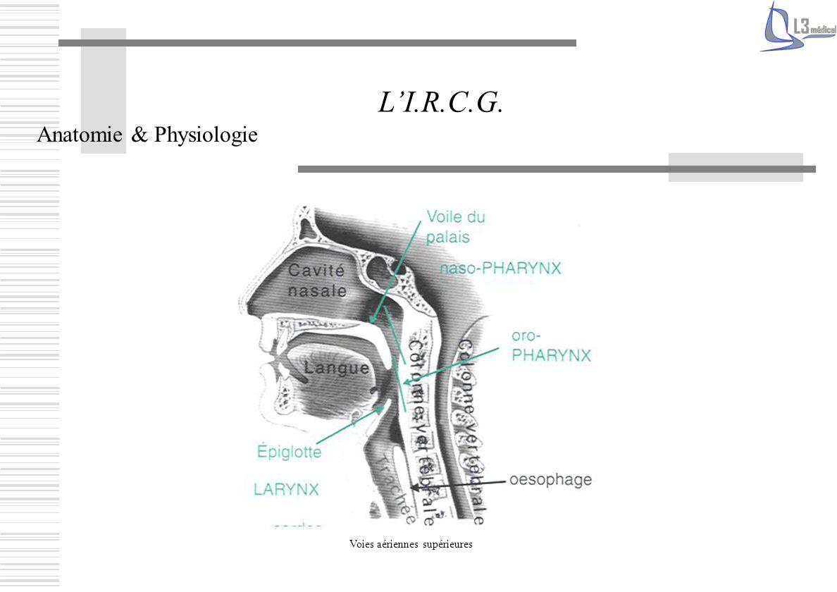 Anatomie & Physiologie LI.R.C.G. Voies aériennes supérieures