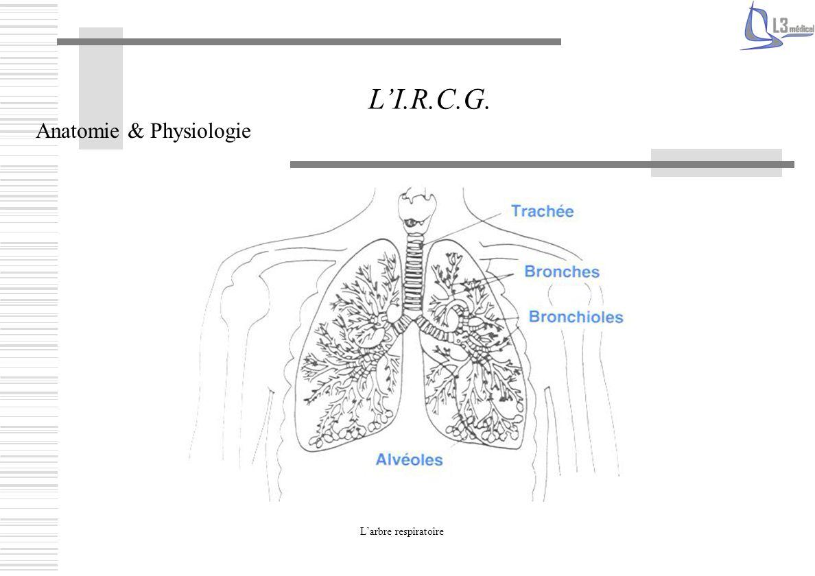 Les voies aériennes supérieures Bouche Nez Pharynx Larynx Larbre respiratoire Trachée Bronches Bronchioles Alvéoles pulmonaires Capillaires pulmonaires Anatomie & Physiologie LI.R.C.G.