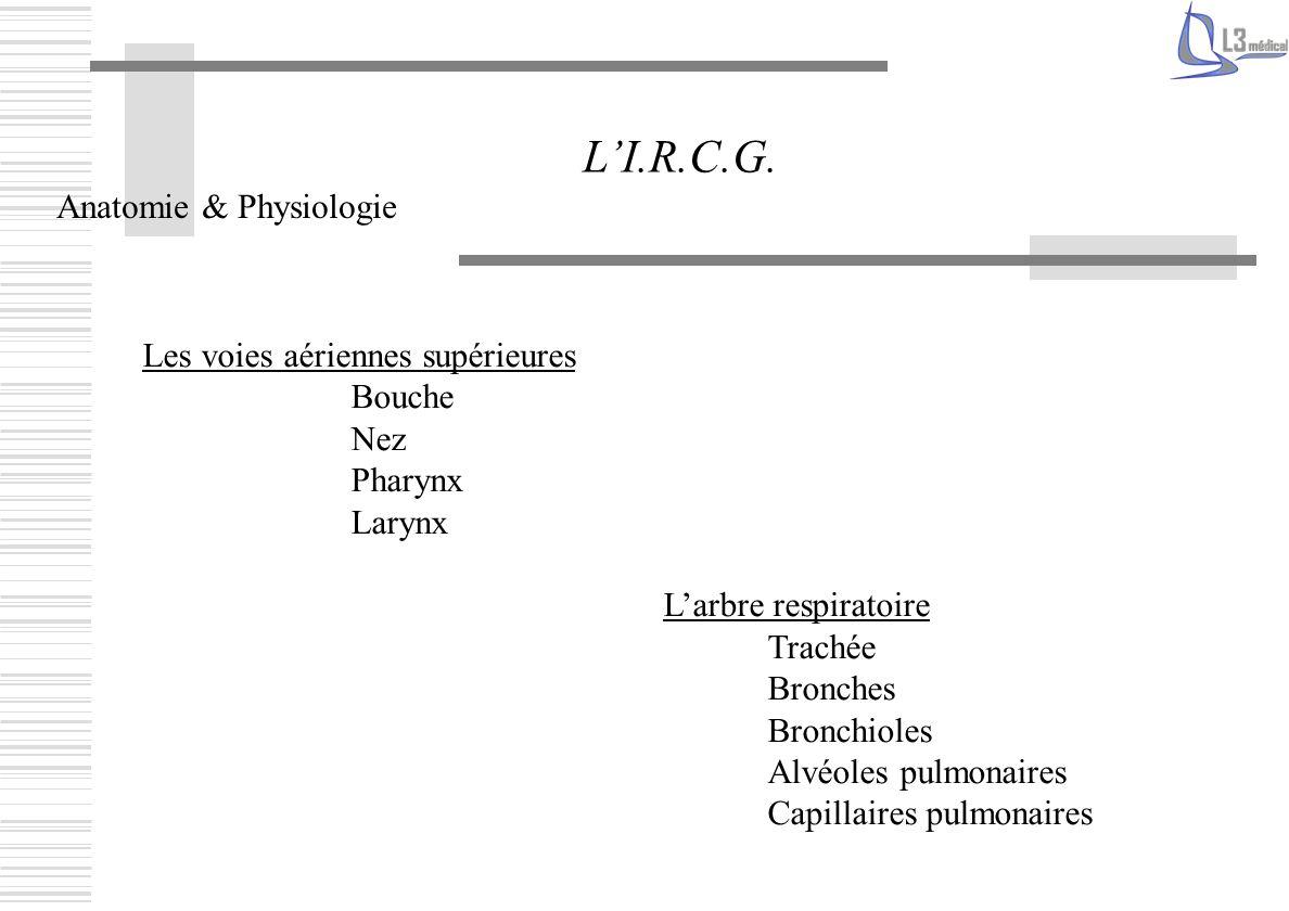 Les voies aériennes supérieures Bouche Nez Pharynx Larynx Larbre respiratoire Trachée Bronches Bronchioles Alvéoles pulmonaires Capillaires pulmonaire