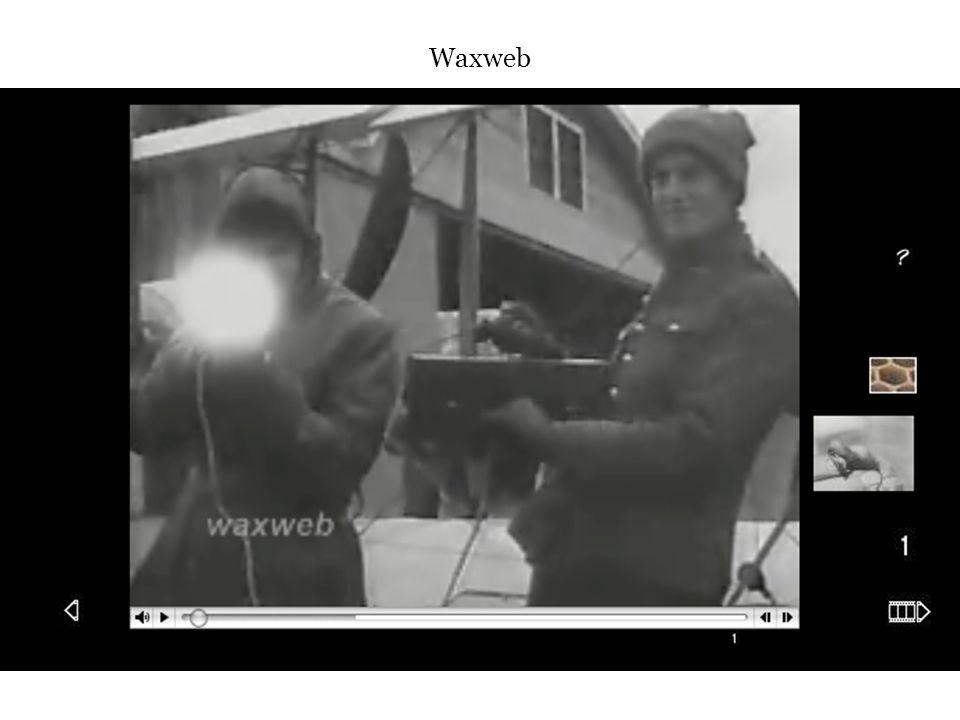 Waxweb