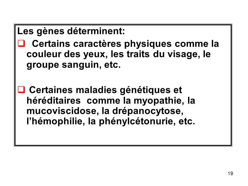 19 Les gènes déterminent: Certains caractères physiques comme la couleur des yeux, les traits du visage, le groupe sanguin, etc.