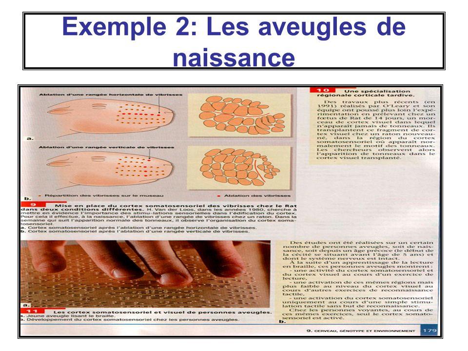40 Exemple 2: Les aveugles de naissance