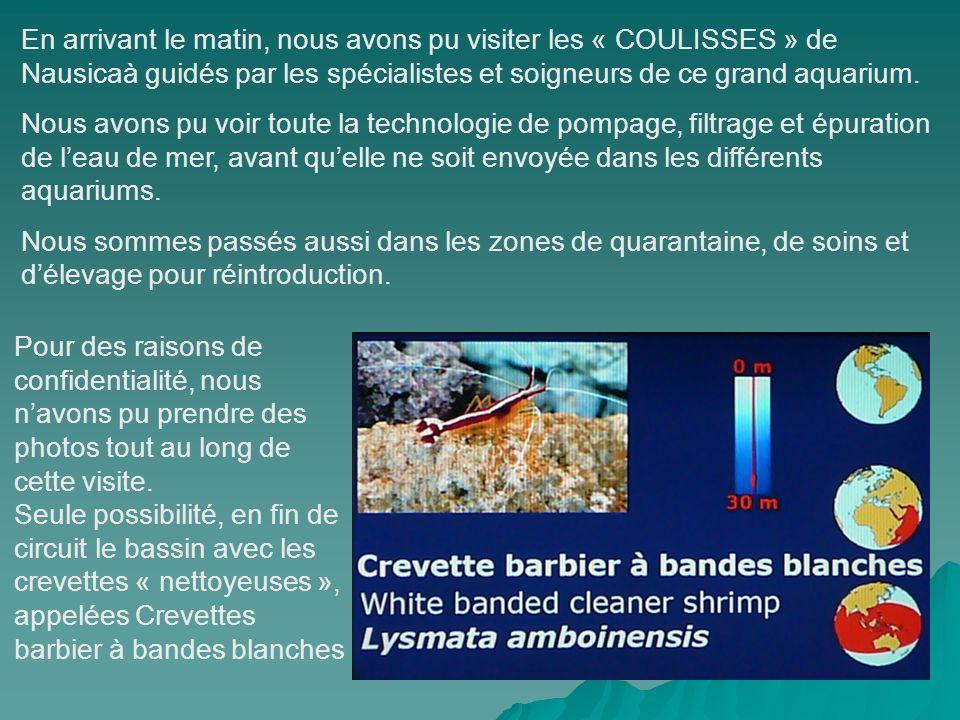 En arrivant le matin, nous avons pu visiter les « COULISSES » de Nausicaà guidés par les spécialistes et soigneurs de ce grand aquarium.