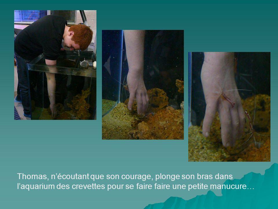 Thomas, nécoutant que son courage, plonge son bras dans laquarium des crevettes pour se faire faire une petite manucure…