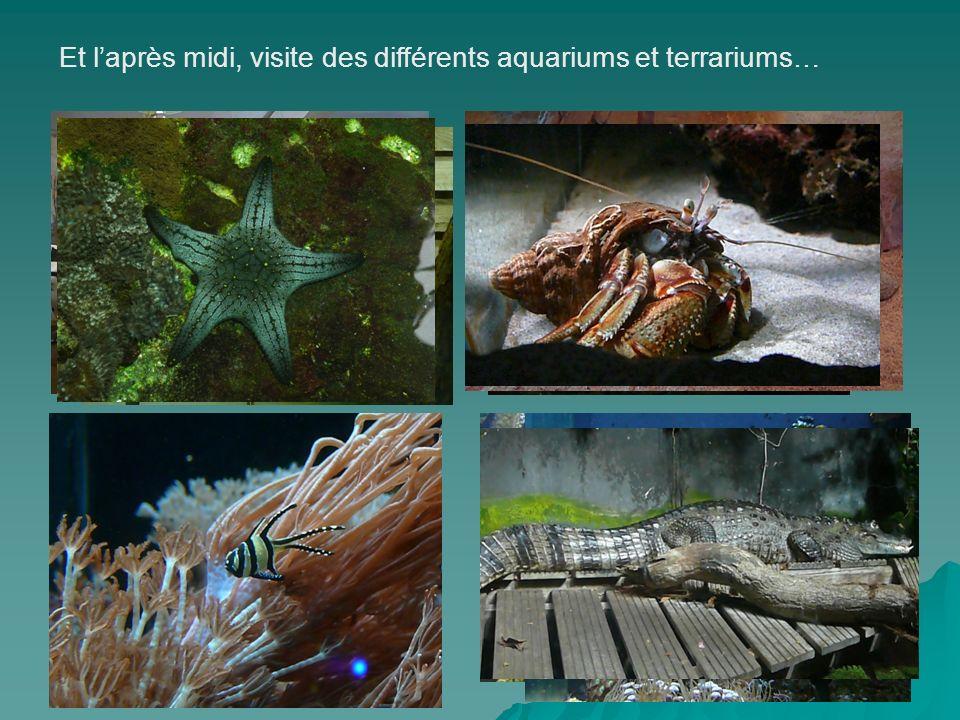 Et laprès midi, visite des différents aquariums et terrariums…