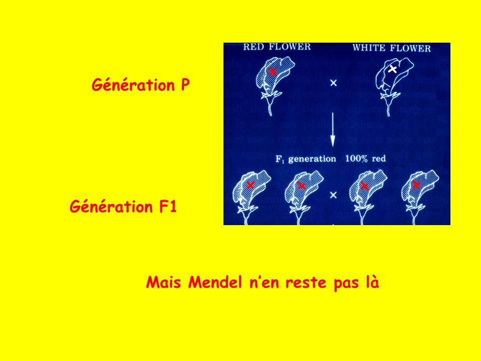 Mais Mendel nen reste pas là Génération P Génération F1