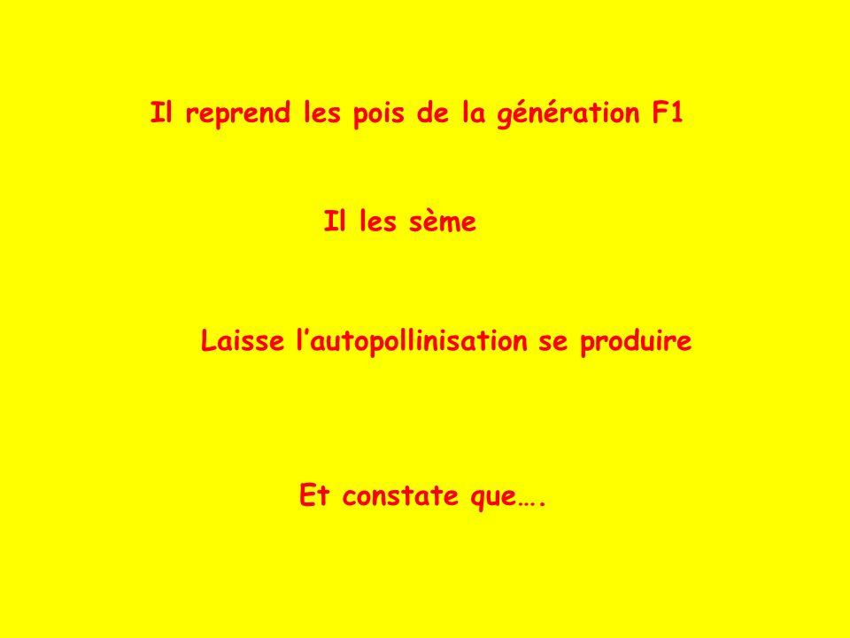 Il reprend les pois de la génération F1 Il les sème Laisse lautopollinisation se produire Et constate que….