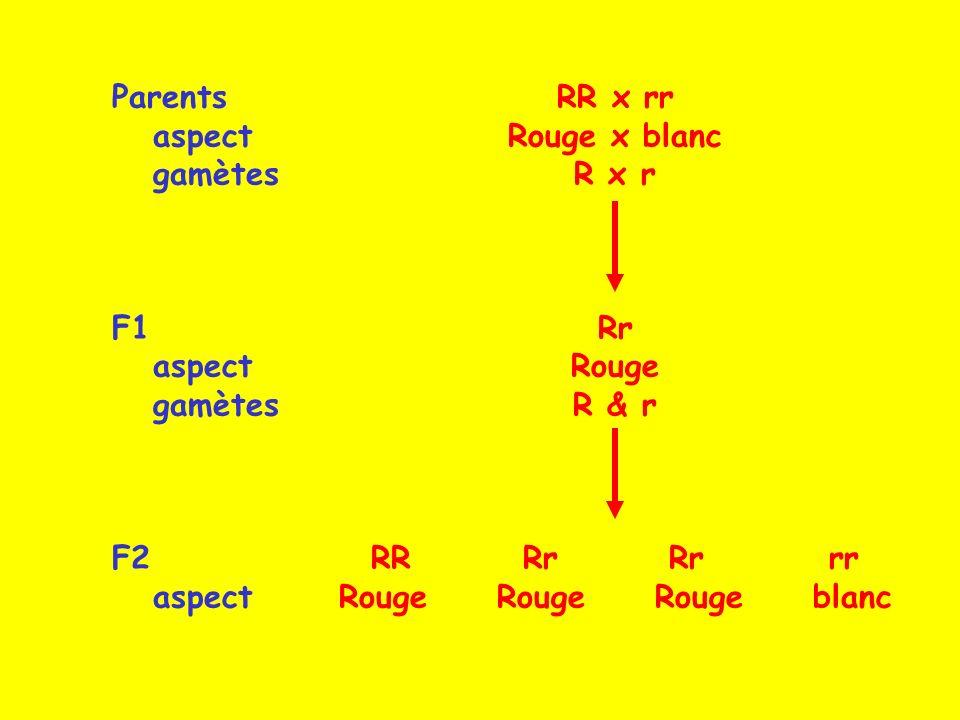 RR x rr Rouge x blanc R x r Rr Rouge R & r RR Rr Rr rr Rouge Rouge Rouge blanc Parents aspect gamètes F1 aspect gamètes F2 aspect