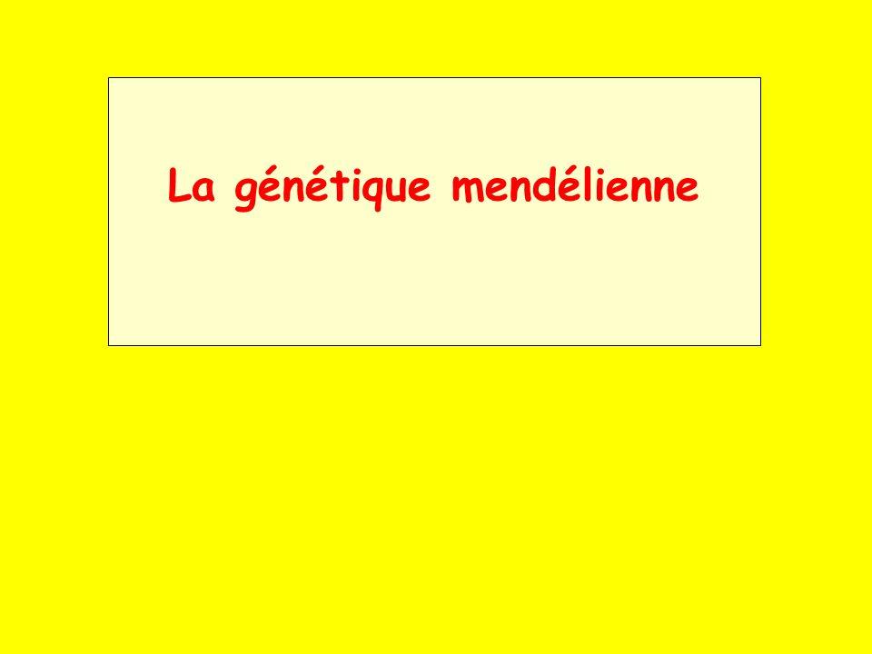 Le père de la génétique est un moine autrichien du nom de Grégor Mendel (1822-1884), ce sont ses travaux sur la transmission des caractères chez le pois qui établirent les bases scientifiques de la génétique