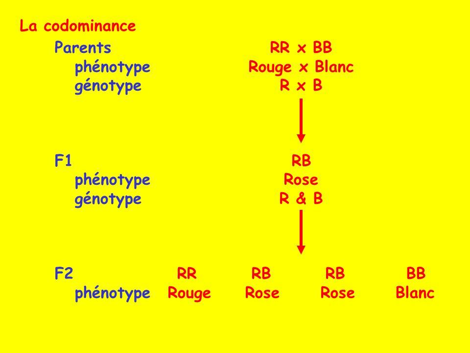 RR x BB Rouge x Blanc R x B RB Rose R & B RR RB RB BB Rouge Rose Rose Blanc Parents phénotype génotype F1 phénotype génotype F2 phénotype La codominance