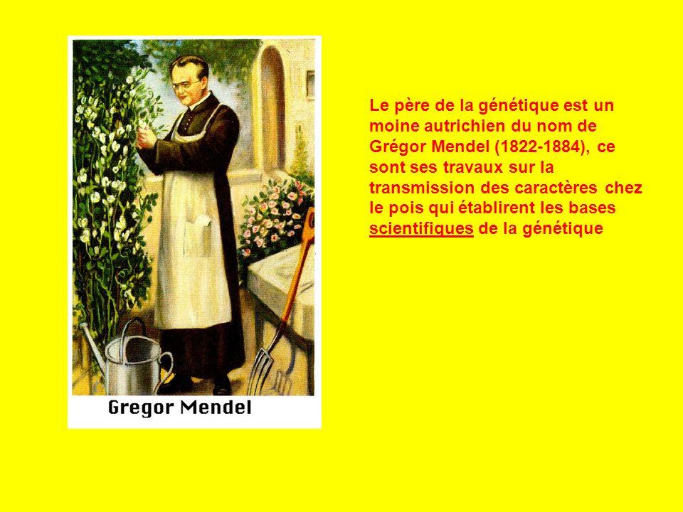 Le père de la génétique est un moine autrichien du nom de Grégor Mendel (1822-1884), ce sont ses travaux sur la transmission des caractères chez le po