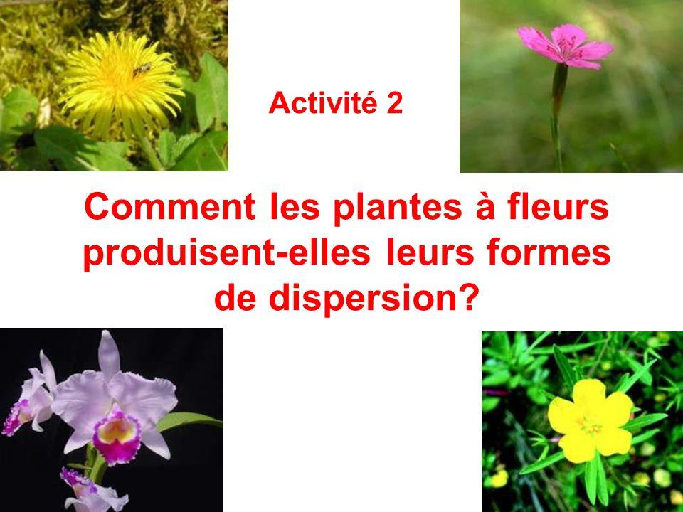 Comment les plantes à fleurs produisent-elles leurs formes de dispersion? Activité 2