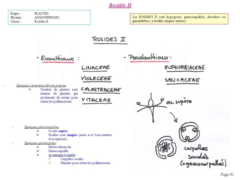 Rosidés II Page 92 Règne : PLANTES Phylum : ANGIOSPERMES Classe : Rosidés II -Quelques plésiomorphies : supère Ovaire supère simples Feuilles sont simples (mais avec bon nombre dexceptions).