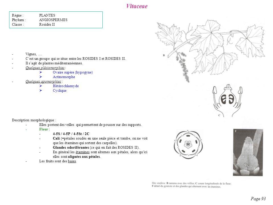 Vitaceae Page 93 Description morphologique : -Elles portent des vrilles qui permettent de pousser sur des supports.