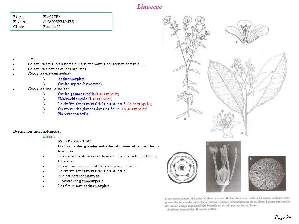 Linaceae Page 94 Description morphologique : -Fleur -Fleur : -5S / 5P / 5St / 3-5C glandes -On trouve des glandes entre les étamines et les pétales, à leur base.