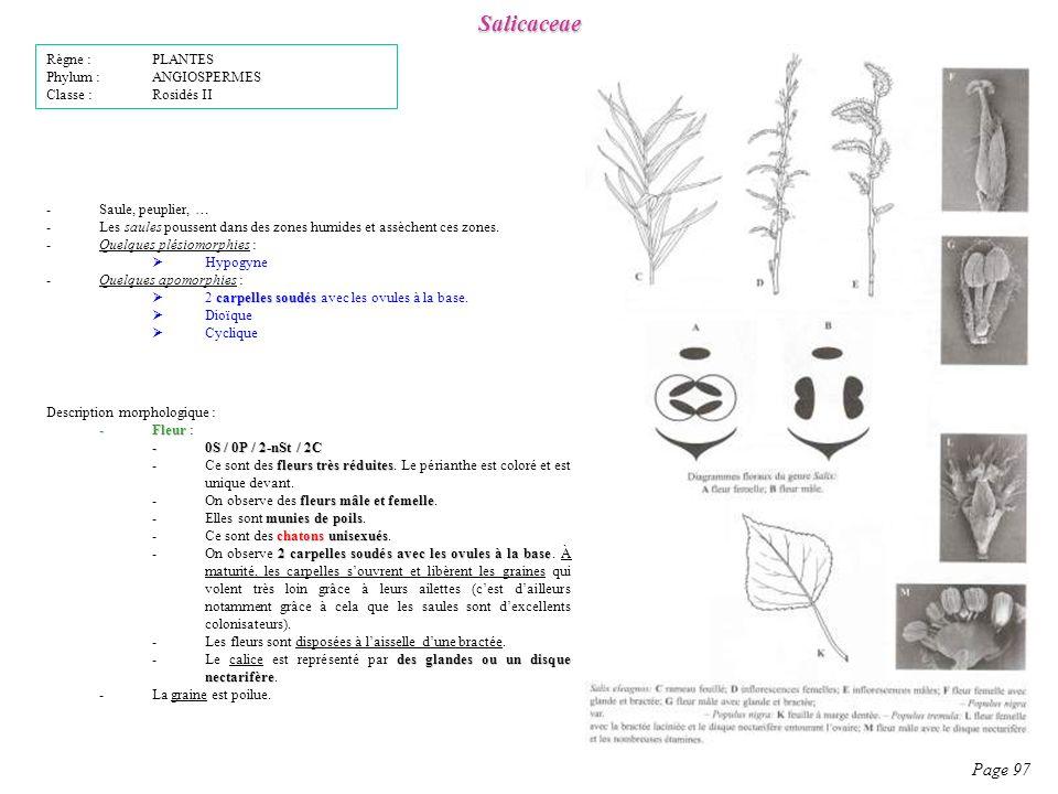 Salicaceae Page 97 Description morphologique : -Fleur -Fleur : -0S / 0P / 2-nSt / 2C fleurs très réduites -Ce sont des fleurs très réduites.