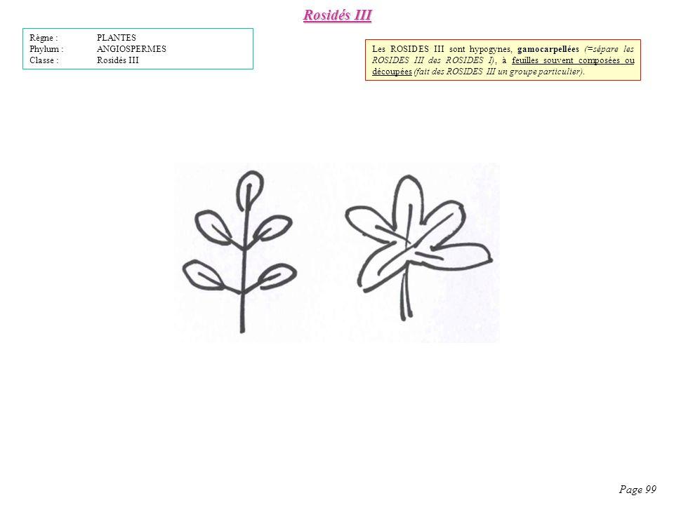 Rosidés III Page 99 Règne : PLANTES Phylum : ANGIOSPERMES Classe : Rosidés III gamocarpellées Les ROSIDES III sont hypogynes, gamocarpellées (=sépare les ROSIDES III des ROSIDES I), à feuilles souvent composées ou découpées (fait des ROSIDES III un groupe particulier).